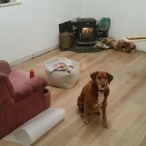 Toesun thinks the new floor and stove are cool!