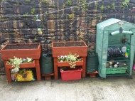 Planters with broccoli, spuds and flowers